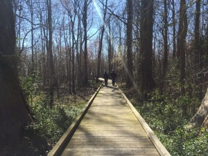 Pettigrew State Park Trail, by Somerset Place (formerly Plantation) in Creswell, NC